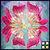 Thumb_7721flower-med