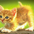 Thumb_kitty