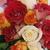 Thumb_roses_035
